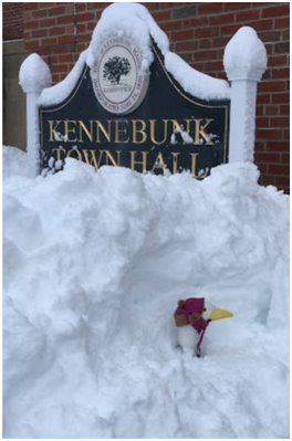 Town Hall Goose buried in snow