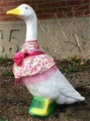 Town Hall Goose