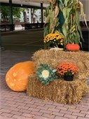 HarvestFest Schedule