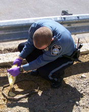 Criminal Investigator working on a crime scene