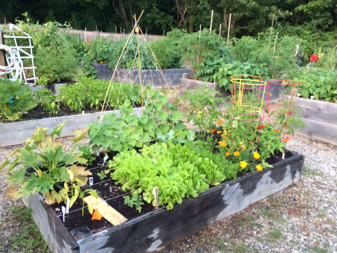 Park Street School raised beds